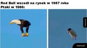 Dodał skrzydeł