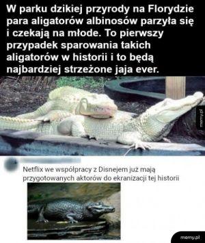 Rzadkie zwierzęta