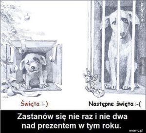Pies to nie prezent