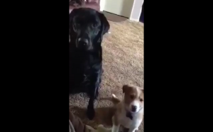 Kto jest twoim najlepszym kumplem?