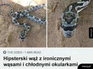 Hipsterski wąż