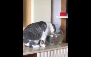 Spadaj, to moje akwarium!