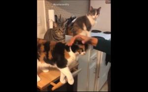 Ten koteł jest jakiś inny..