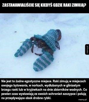 Zimują o tak