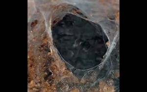 Małe tarantule
