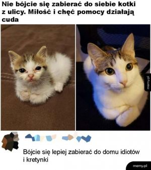 Lepsze kotki