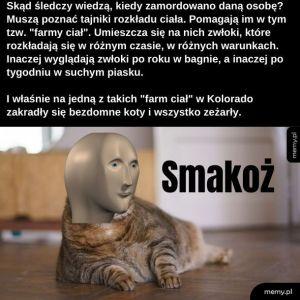 Koci koci łapci