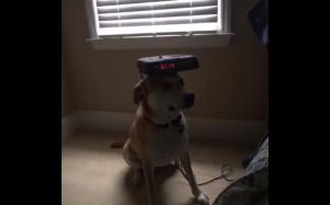 Wielofunkcyjny pies