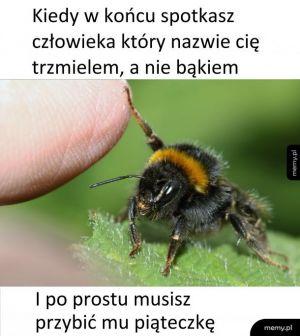 Trzmiel