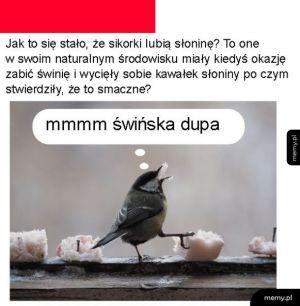 Sikorki