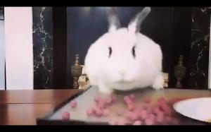 Chciwy królik