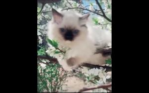 Kotełki w rozkwicie