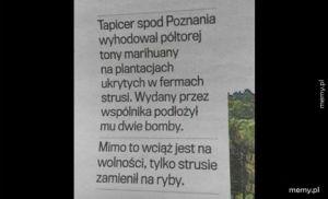 Tapicer spod Poznania