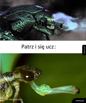 Obcy i larwa ważki