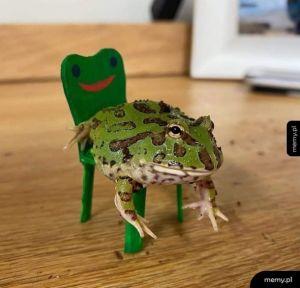 To tylko żaba na żabim krześle, scrolluj dalej
