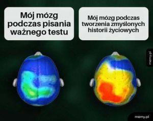 No dawaj, mózgu!