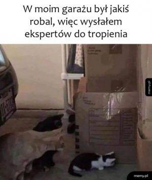 Eksperci