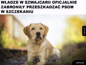 Prawa psów w Szwajcarii