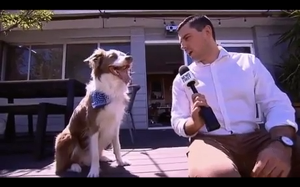 Wywiad