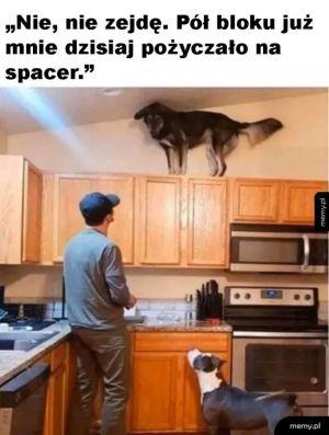 Pies ma już dość