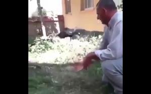 Gołąb uczy się latać