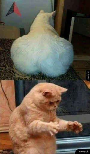 Gruby koteł