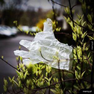 Wiosna w czasach pandemii