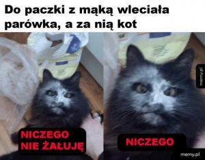 Mączny kot