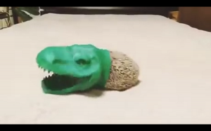 Dinozoaur