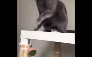 Mądry koteł