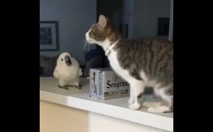 Zdziwiona papuga