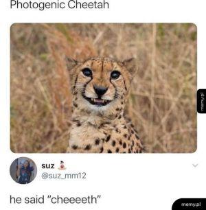 Uśmiechnięty gepard :)