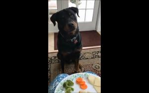 Żadnych warzyw!