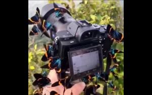 Inwazja motyli