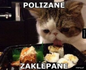 Cwany kotek
