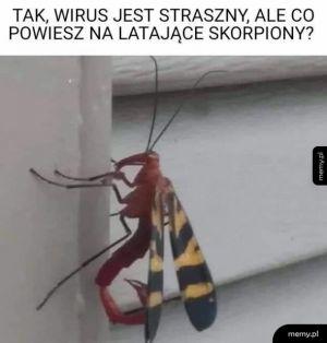 Latający skorpion