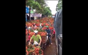 Królestwo liczi, Wietnam