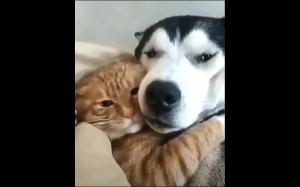 Najlepsi kumple