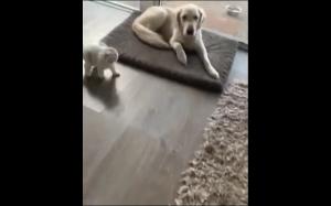 Koteł uczy się przybijać piątkę