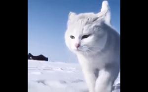 Śnieżny koteł
