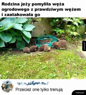 Wąż ogrodowy