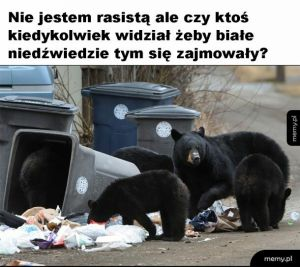 Niedźwiedzie