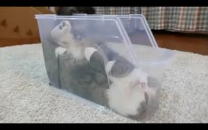 Koteł w pudełku
