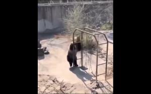 Niedźwiadek na placu zabaw