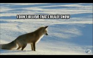 Arktyczny Lis.exe przestał działać