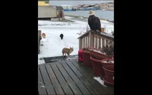 Natura na Alasce