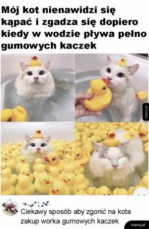 Gumowe kaczki
