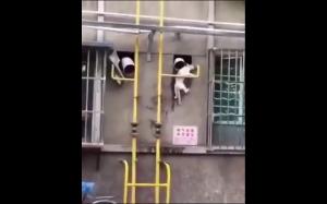 Kot włamywacz