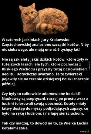 Pradawne koteły