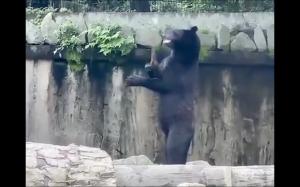 Kung fu niedźwiedź